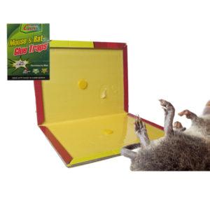 Αυτοκόλλητη παγίδα για ποντίκια και αρουραίους [30501257]