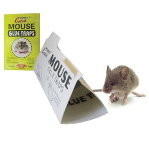 Σετ 2 αυτοκόλλητες ποντικοπαγίδες [30501253]