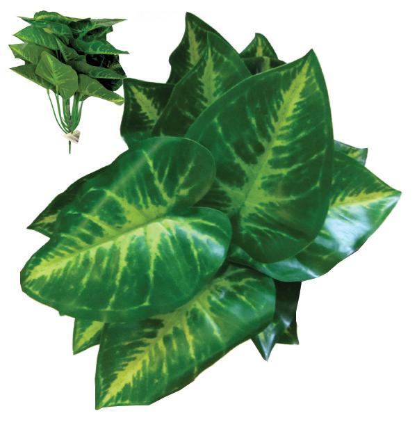 Πρασινάδα με φύλλο σε σχήμα καρδιάς